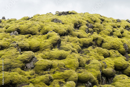 Foto op Plexiglas Natuur leuchtende bizarre Lavaformation bewachsen mit Zackenmützenmoos