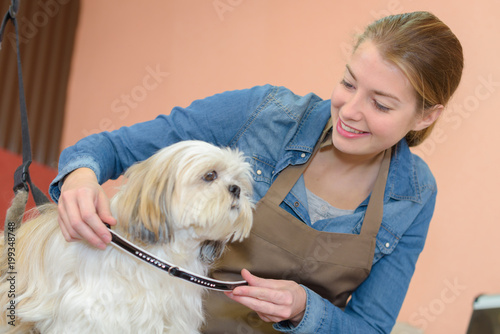 pet grooming business Poster