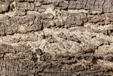 The bark of an acacia tree - 199361383