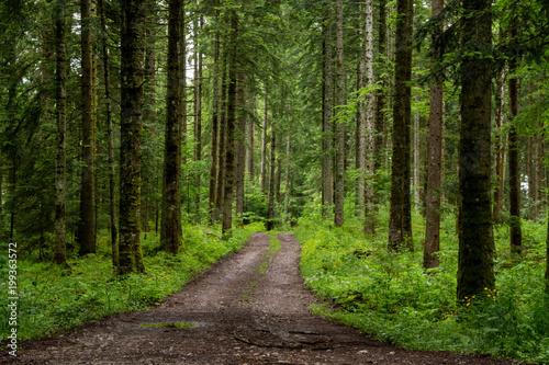 Fotobehang Weg in bos chemin forêt
