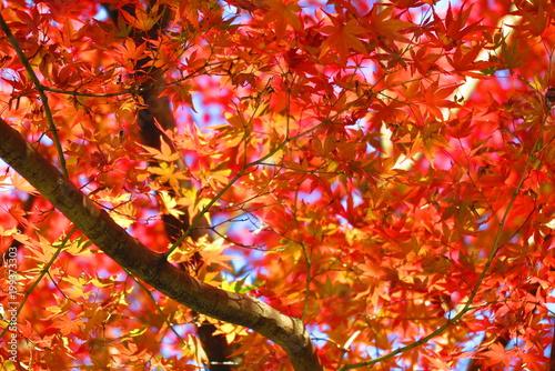 Fotobehang Rood traf. 境内の秋の風景50
