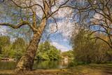 Quiet landscape of London park