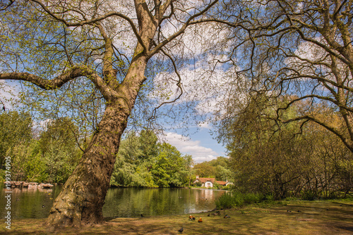 Fotobehang Londen Quiet landscape of London park
