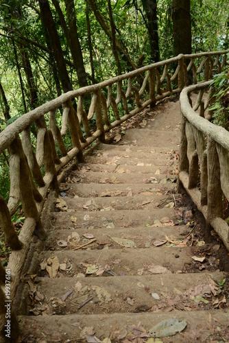 Fotobehang Weg in bos Camino en medio del bosque