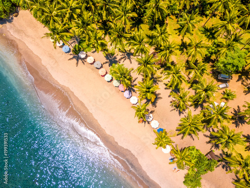 Tropical Beach and Many Palm Trees. Aerial View