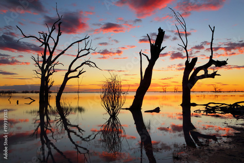 Old gnarly trees on the lake at sunset - 199393103