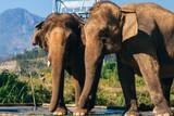 Elephants outdoors in the Park in Da Lat, Vietnam