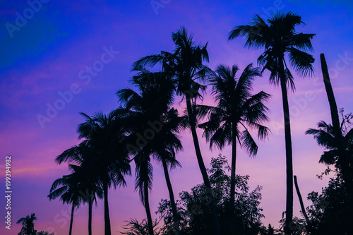 Canvas Donkerblauw silhouettes of palm trees on the background of purple blue sky in summer at sunset