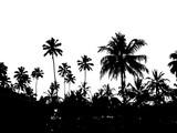 красивый черный силуэт на белом фоне тропических пальм               - 199396500