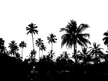 красивый черный силуэт на белом фоне тропических пальм               Sticker