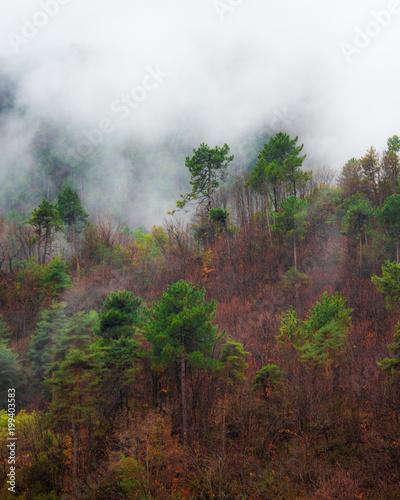Aluminium Wit Alberi tra la nebbia di montagna