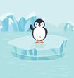 Penguin bird  in North pole Arctic