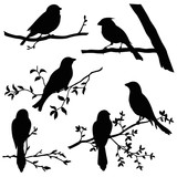 birds on branches silhouette set