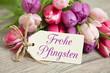 Tulpen und Karte: Frohe Pfingsten