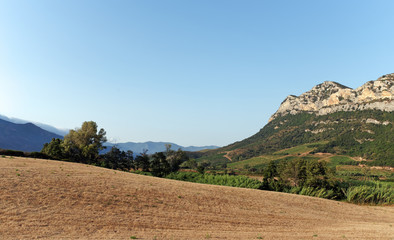 Corsica vineyard and Agriculture in Patrimonio hills