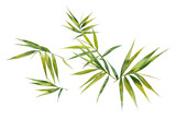 Watercolor illustration painting of bamboo leaves , on white background - 199417946