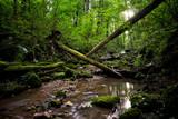 Wildbach Natur Wald