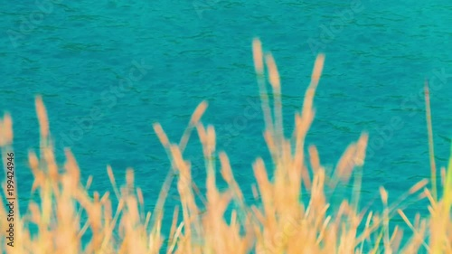 Beautiful clear ocean water with gentle waves and tall yellow grass in the foreground