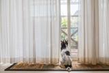 縁側で窓の外を見る愛犬 - 199427131