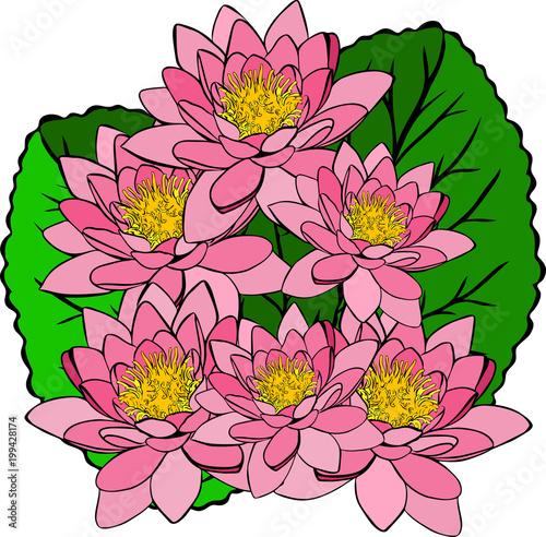 bukiet różowych lilii wodnych i zielonych liści