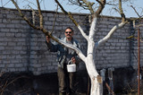 Spring protection of fruit trees in the garden.Whitewashing of trees in spring - 199431131