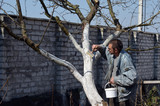 Spring protection of fruit trees in the garden.Whitewashing of trees in spring - 199431138
