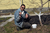 Spring protection of fruit trees in the garden.Whitewashing of trees in spring - 199431398