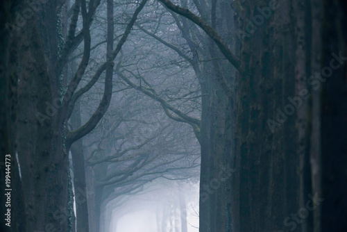 Misty forest lane in the winter. - 199444773