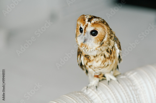 hand-held owl sits at home