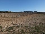 vineyard in winter in Provence