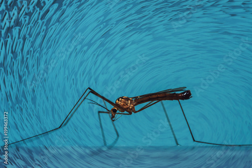 Large mosquito sits on blue wall close-up. Macro photography of giant insect on blue background. - 199463372