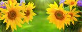 Yellow sunflowers background.