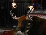 toro de fuego en españa