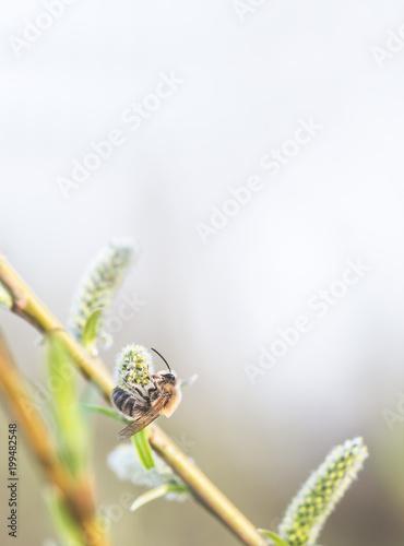 Plexiglas Bee Biene sammelt Honig