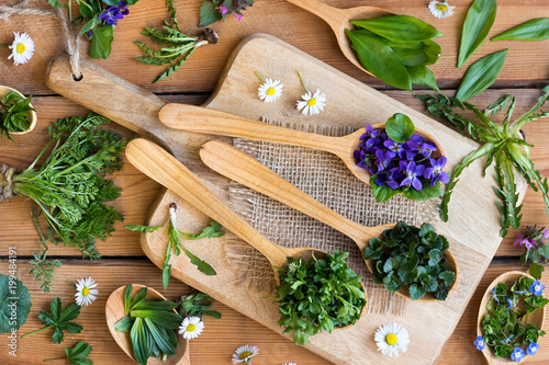 Wild edible spring herbs on wooden spoons