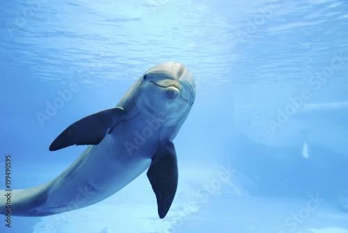 Foto Spatwand Dolfijn Dolphin