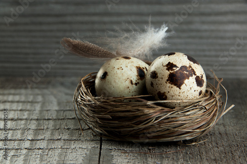 Quail eggs and feather in nest on wooden background