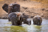 Badende Elefanten im Wasserloch