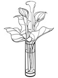 Callas in a vase. Calla, lily with leaves. Flowers in a glass vase. Bouquet. Line drawing. For coloring.