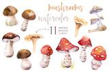 Watercolor bohemian forest mushrooms poster, woodland isolated amanita illustration, fly agaric, boletus, orange-cap boletus mushroom decoration. - 199500795