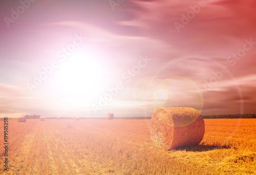 Foto op Plexiglas Oranje eclat Hay bale in the countryside