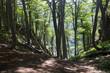 Hilltop forest views - 199505577