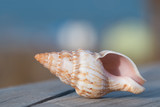 Zbliżenie morskiej muszli w kształcie stożka, która leży na drewnianym pomoście w oddali widać rozmyte morze i piasek. Wakacyjne, słoneczne jasne kolory. - 199507716