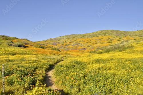 Tuinposter Honing Green Hills