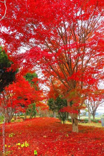 Fotobehang Rood traf. 秋の川原の公園の風景10