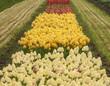 488-13 Tulip Row