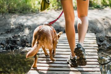 Dog and girl crossing bridge