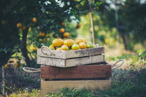 pomarańczowe pudełko na drewnianym stole