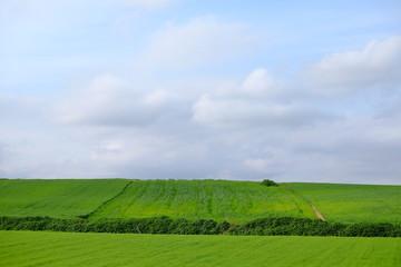Green field in Mollet del Valles in Barcelona province in Catalonia Spain