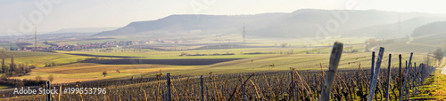Deurstickers Wijngaard Panorama vineyard landscape view in Germany